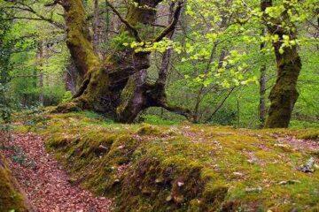 #Natureandoencorto: Robledal de Castrejón
