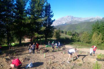 Conservación y mejora de la plantación arbustiva en San Tirso (Cillorigo de Liébana)