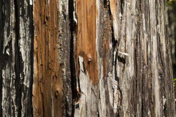 Taller infantil: las texturas del bosque