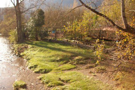 #Natureandoencorto: Vegacorredor, el regreso de la nutria