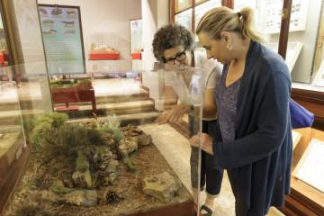 El Museo de la Naturaleza de Cantabria acoge una exposición sobre anfibios y reptiles de la Península Ibérica